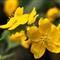 _DSC9917 yellow
