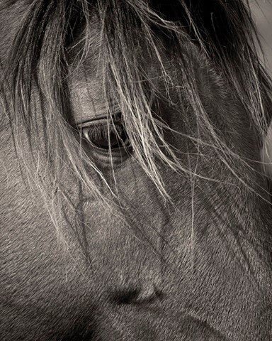 Horse eye 1 lg