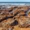 IMG_4407-Mona Vale beach-4