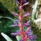 Bullis Bromeliads
