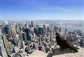 N-Y view by a pigeon from the Empire State building