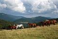 Travel with wild horses