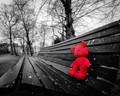 Lonely Bear