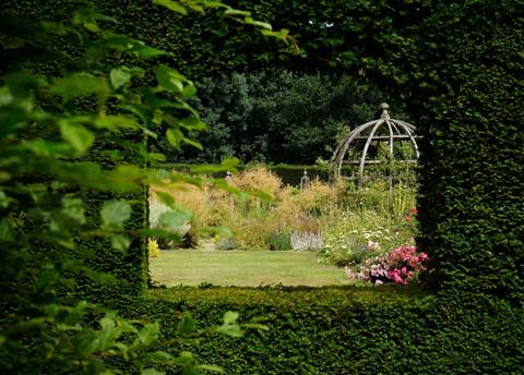 hedge window