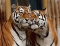 Antwerpen Zoo 2009