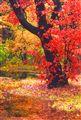 Autumn in Poughkeepsie