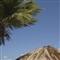 Life of a palm tree