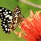 Bubbly Butterfly...