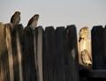 four fledglings
