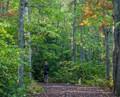 Early fall walk under a tree canopy