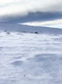 across snow together with wind
