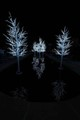 Christmas Lights at Hudson Gardens