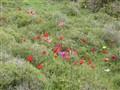 Spring's field