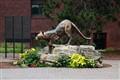 Campus Mascot-UVM Catamount