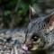 Possum Lateral Head (1280x1025)