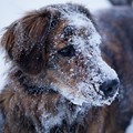 winter dog
