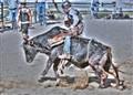 Junior Rodeo Mini-Bull