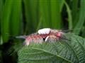 caterpillar01