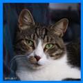 Tuli the CAT