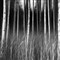 Horror Wood I