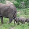 animal elephand 8630 female and two babies south africa feb 2020