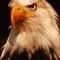 Eagle eyes.