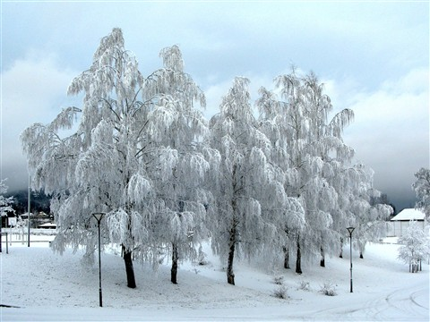 Freezing trees