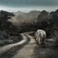 rhino valediction