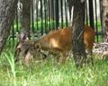 The Deer Hug