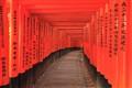Fushimi Inari Shine