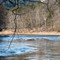 Branches w/ Clarion River in the Background No 1 (D700): Moderately shallow focus on foreground branches with the Clarion River in the background in Cook Forest State Park, Pennsylvania during February.