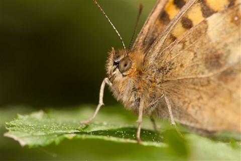 bugs_6