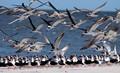 Many Legs, Many Beaks