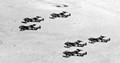 Six DH Venoms of 32 Squadron RAF flying over the Iraqi desert in 1955.