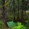 CypressSwampOrig4x6_TpzImpSml