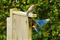 Bluebirds 201101