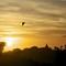 Sunset Flight I