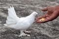 bird human inter
