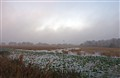 Loxahatchee Fog