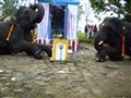 Elephants Prostrating