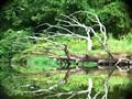 Tarrantula Tree!