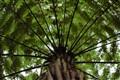 NZ Palm