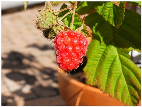 berriesRIMG19439-002