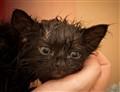 Poe's 1st Bath