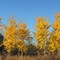 Fall Trees Group