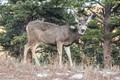 This picture was taken in Estes Park on Thanksgiving while I was renting camera equipment to test out for a week.