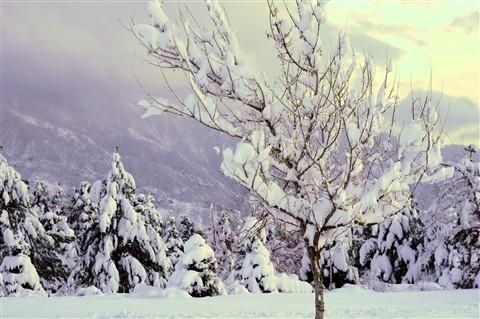 snow field5 Sony NEX F3 Minolta 58mm