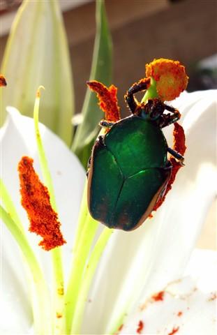 beetle02