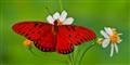 Biloxi Butterfly