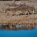 Etosha in Namibia